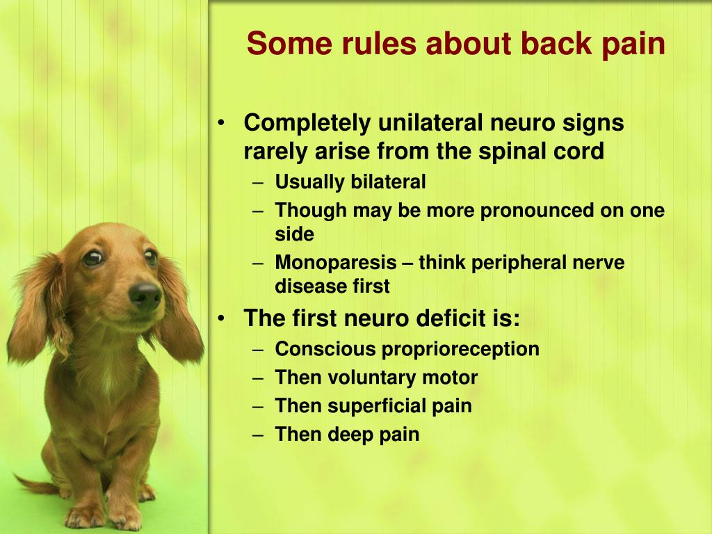 Some rules about back pain