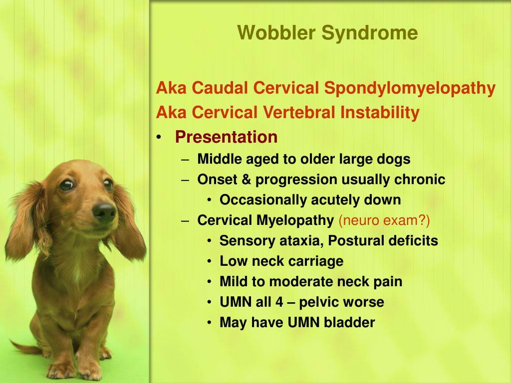 Wobbler Syndrome