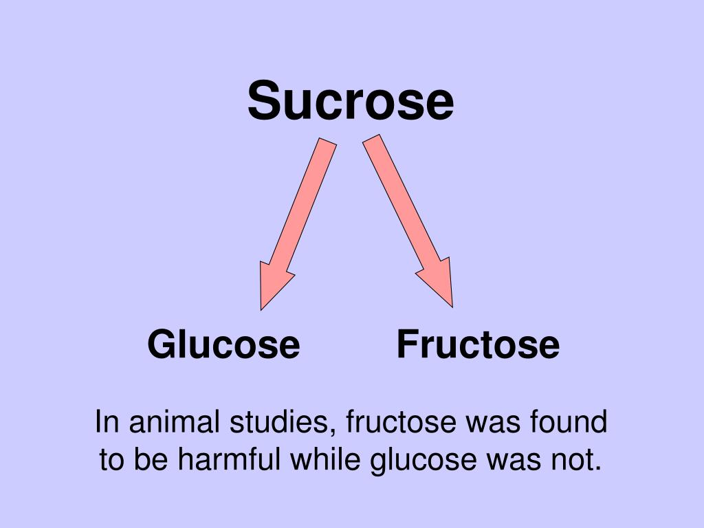 Sucrose Breakdown