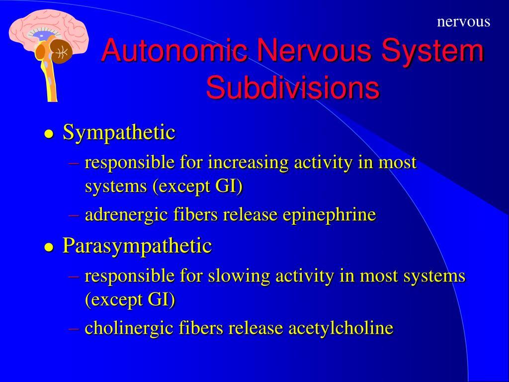 Autonomic Nervous System Subdivisions