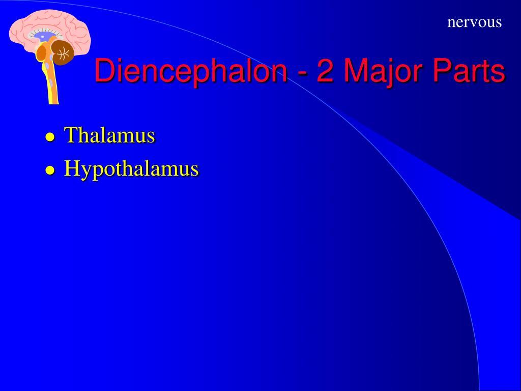 Diencephalon - 2 Major Parts