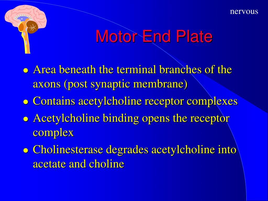 Motor End Plate
