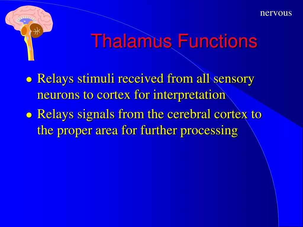 Thalamus Functions