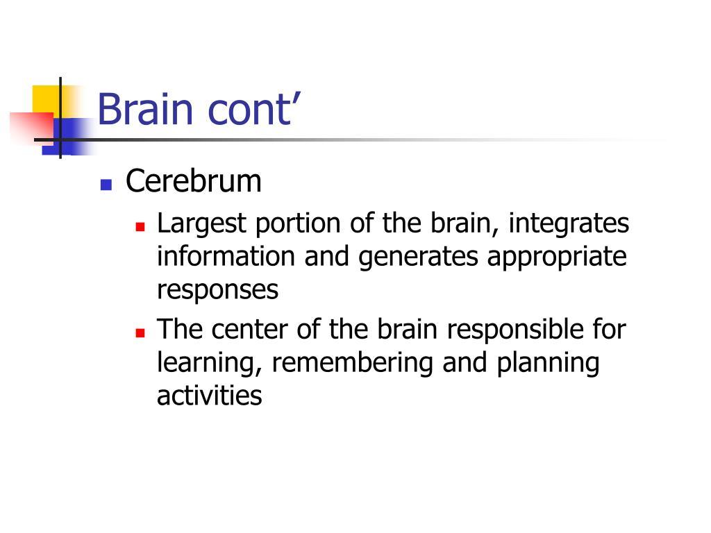 Brain cont'