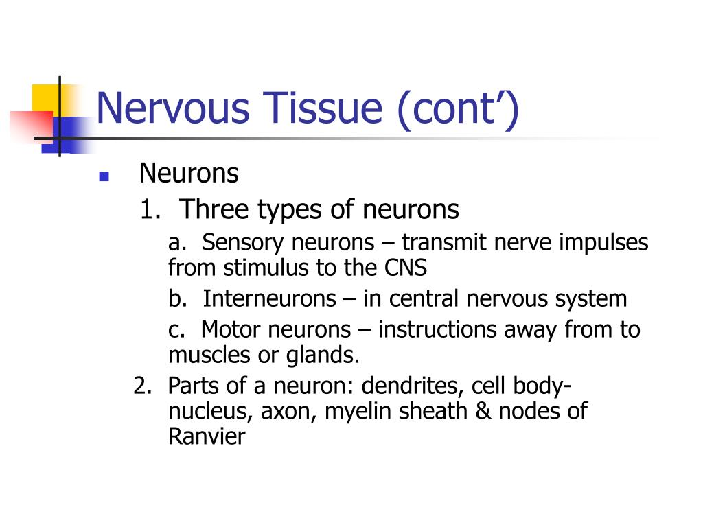 Nervous Tissue (cont')