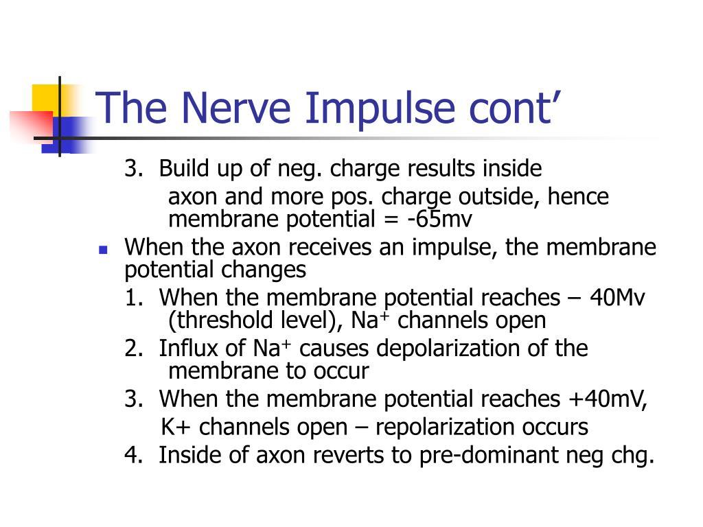 The Nerve Impulse cont'