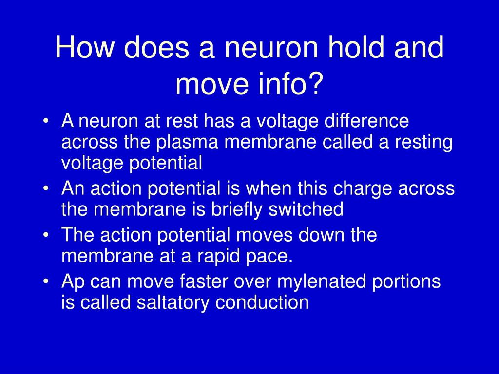 How does a neuron hold and move info?
