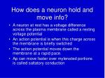 how does a neuron hold and move info
