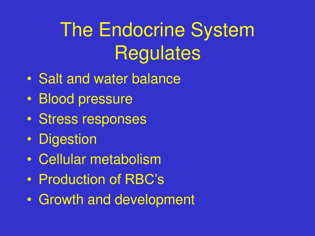 The Endocrine System Regulates