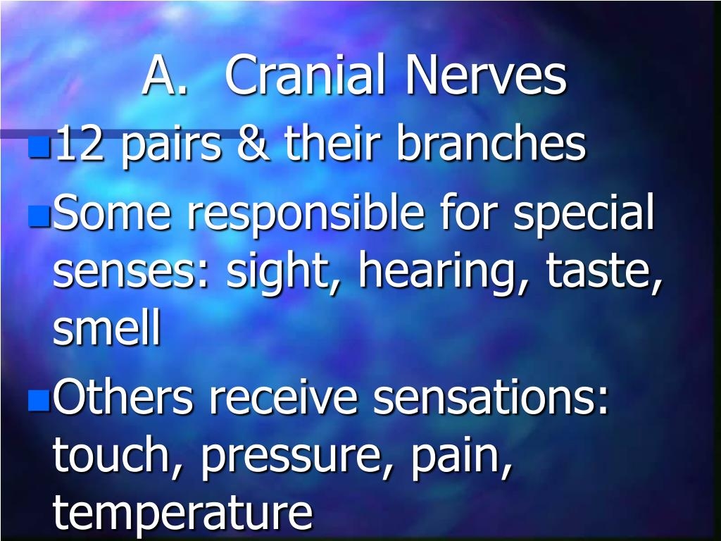 A.  Cranial Nerves