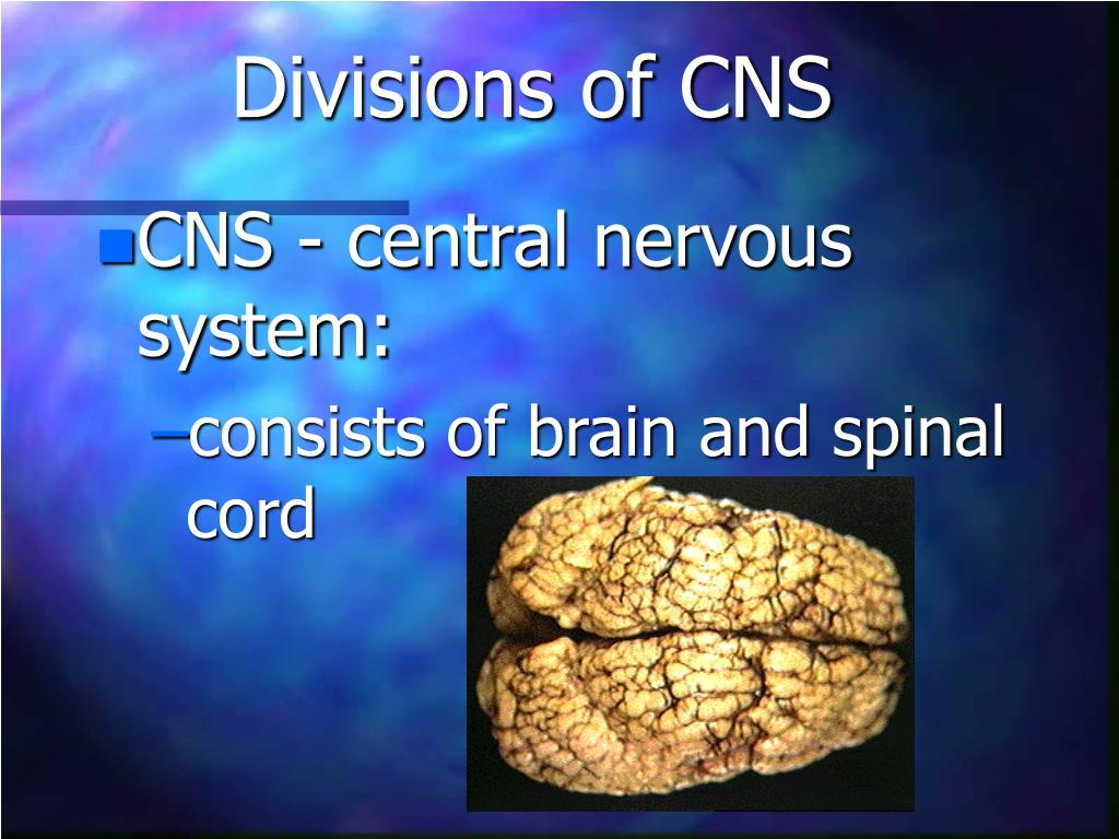 Divisions of CNS