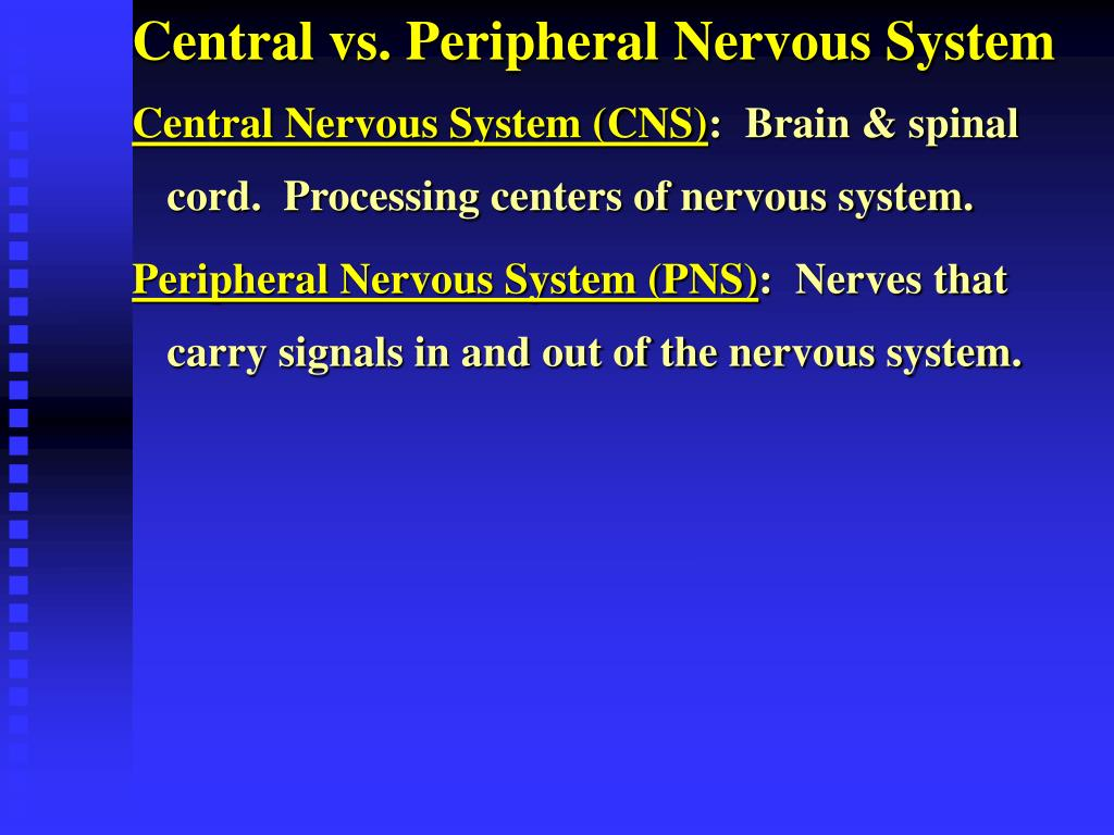Central vs. Peripheral Nervous System