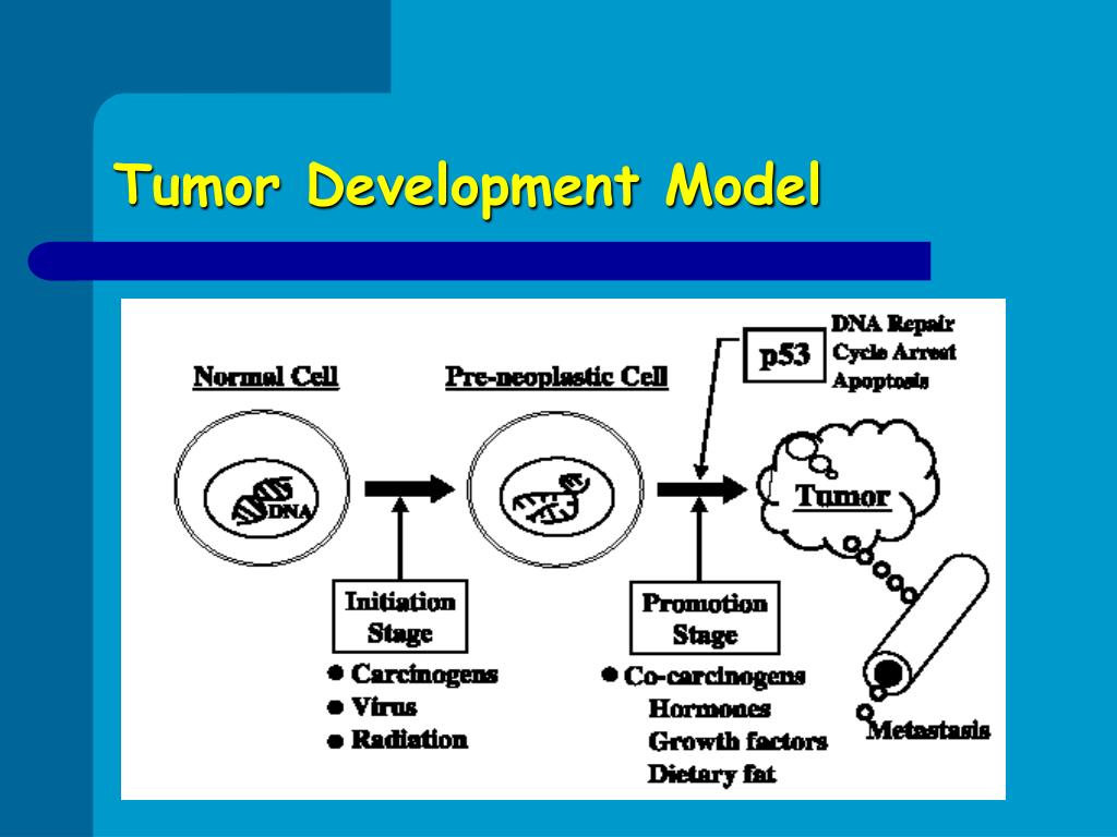 Tumor Development Model