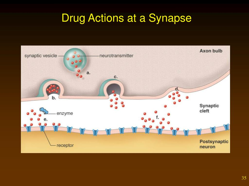 Drug Actions at a Synapse