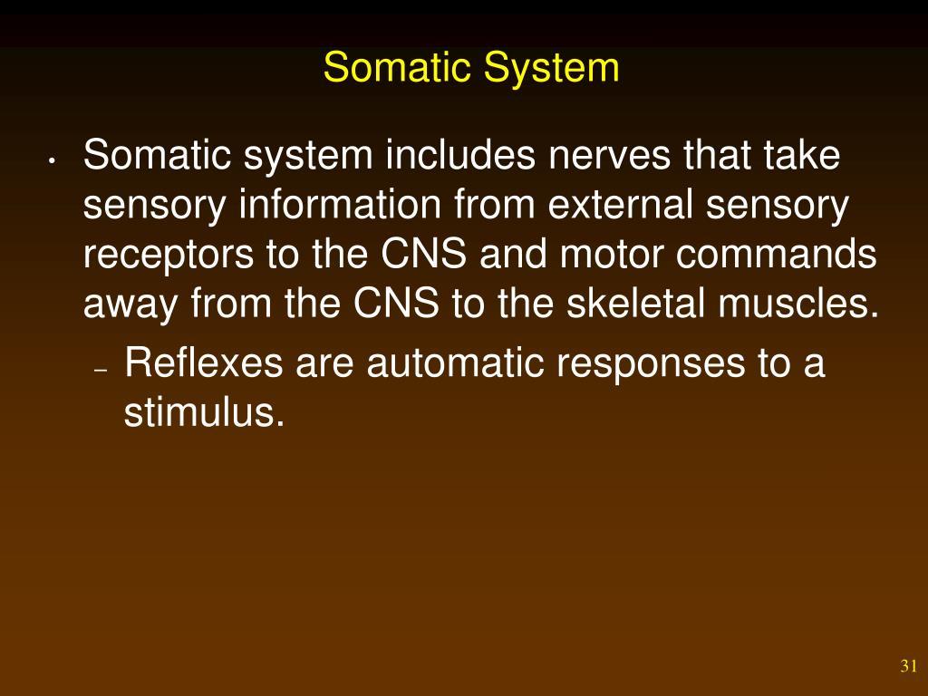 Somatic System