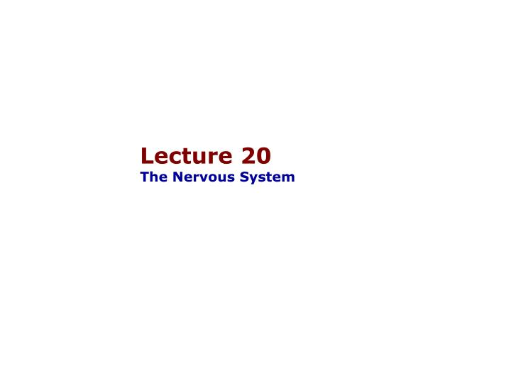 Lecture 20 the nervous system