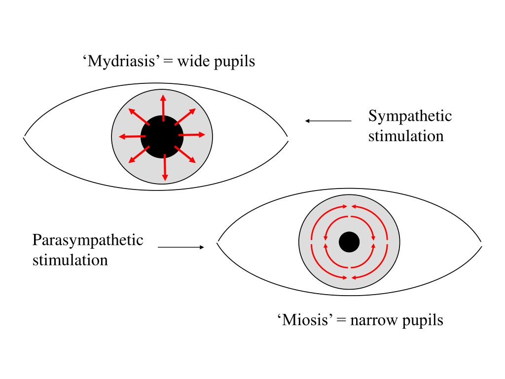 'Mydriasis' = wide pupils