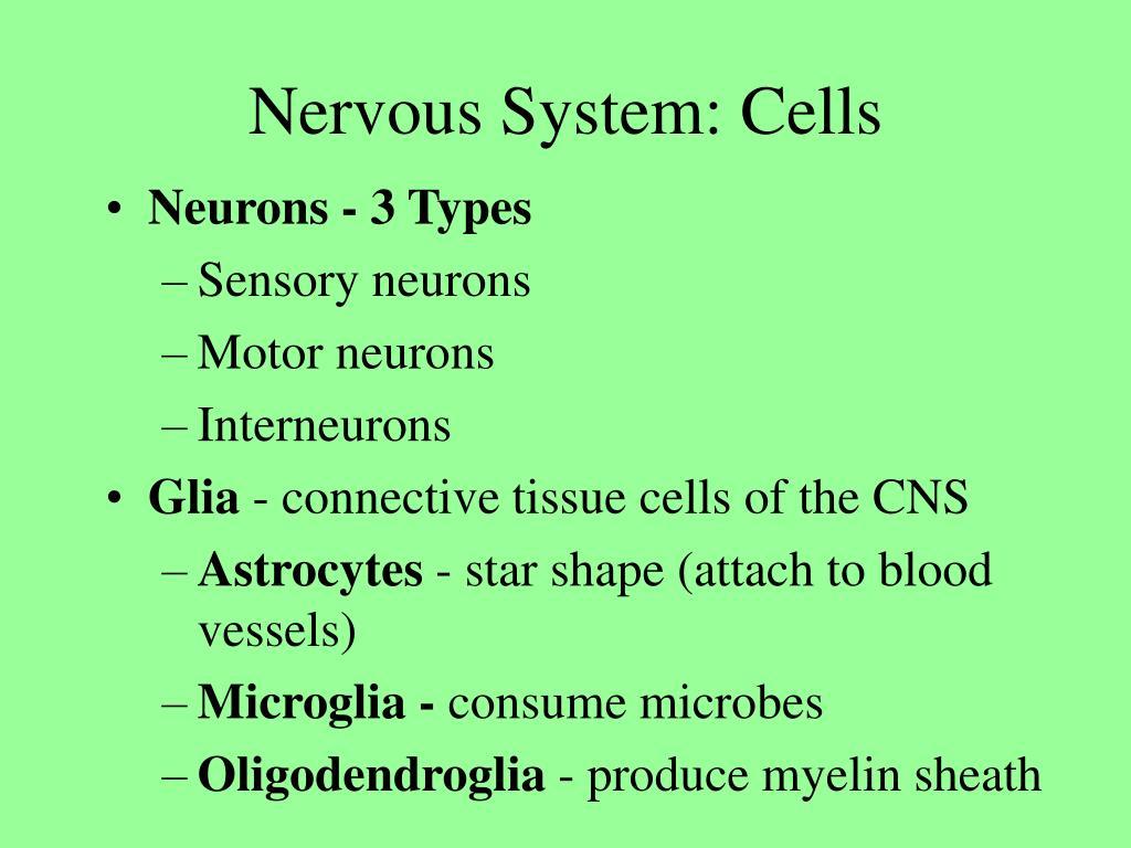 Nervous System: Cells