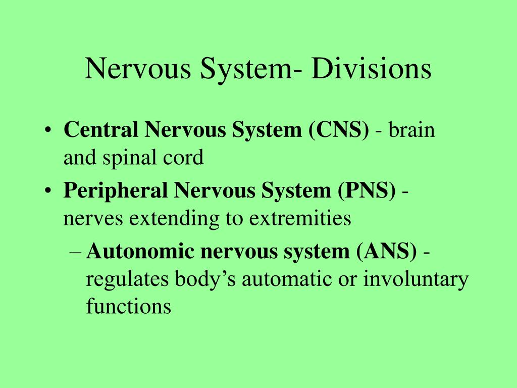 Nervous System- Divisions