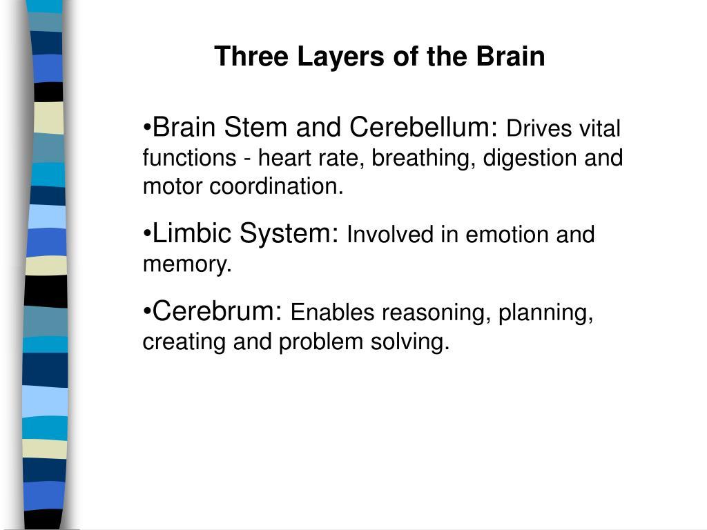Three Layers of the Brain