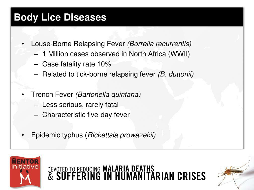 Body Lice Diseases