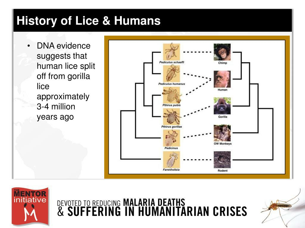 History of Lice & Humans