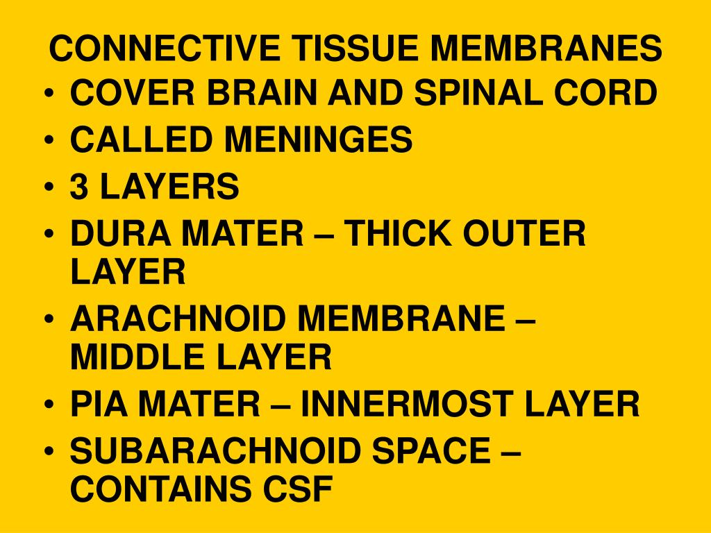 CONNECTIVE TISSUE MEMBRANES