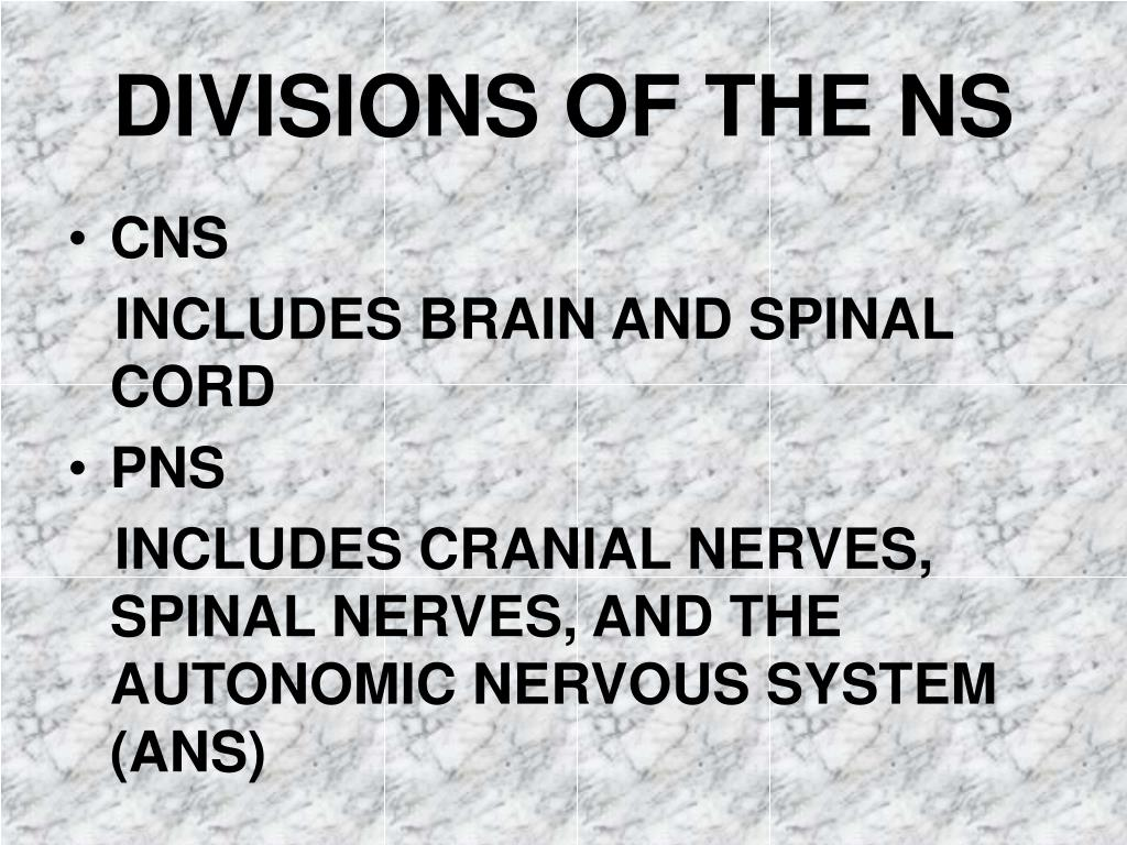 DIVISIONS OF THE NS