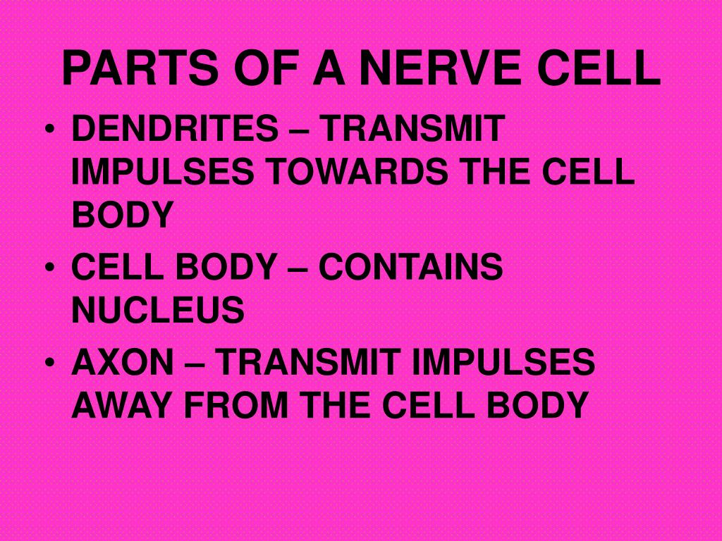 PARTS OF A NERVE CELL