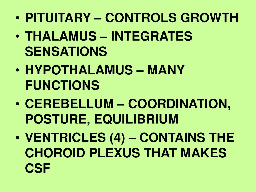 PITUITARY – CONTROLS GROWTH