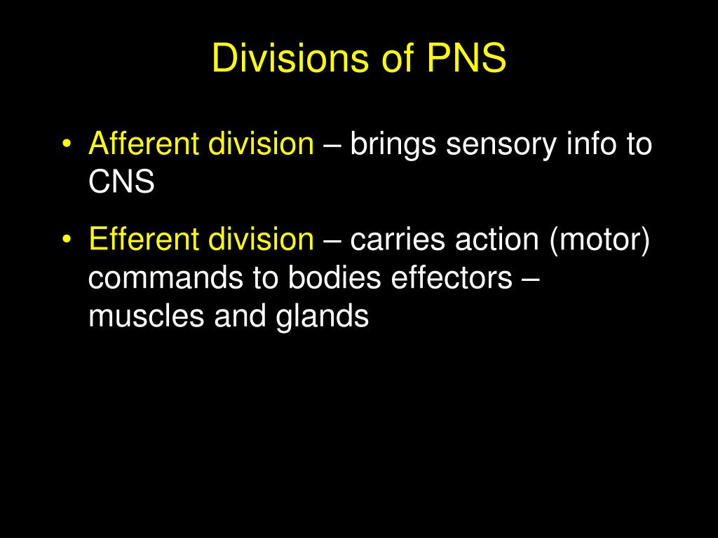 Divisions of PNS