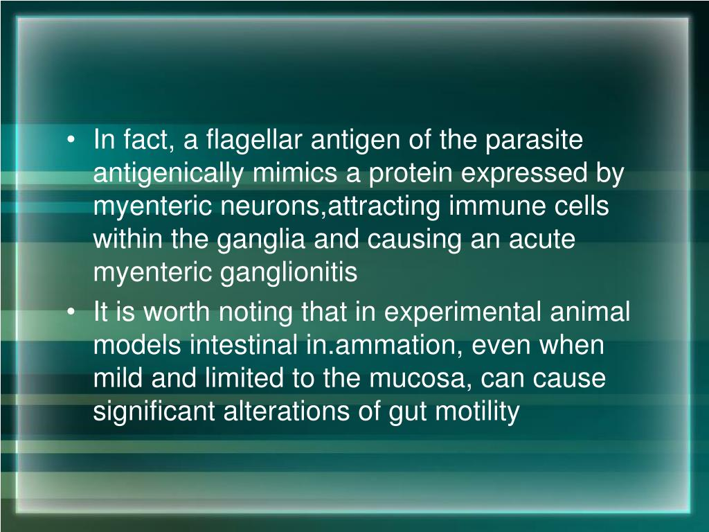 In fact, a flagellar antigen of the parasite antigenically mimics a protein expressed by myenteric neurons,attracting immune cells within the ganglia and causing an acute myenteric ganglionitis