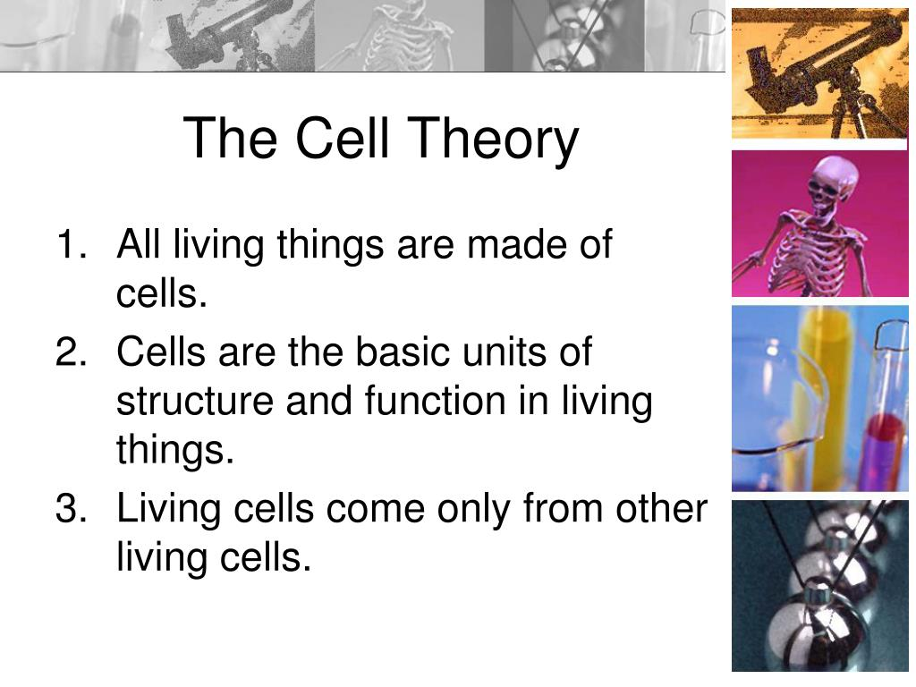 the cell theory Many scientists and the discovery of the microscope contributed to new ideas  about living things one important idea is cell theory, which draws.