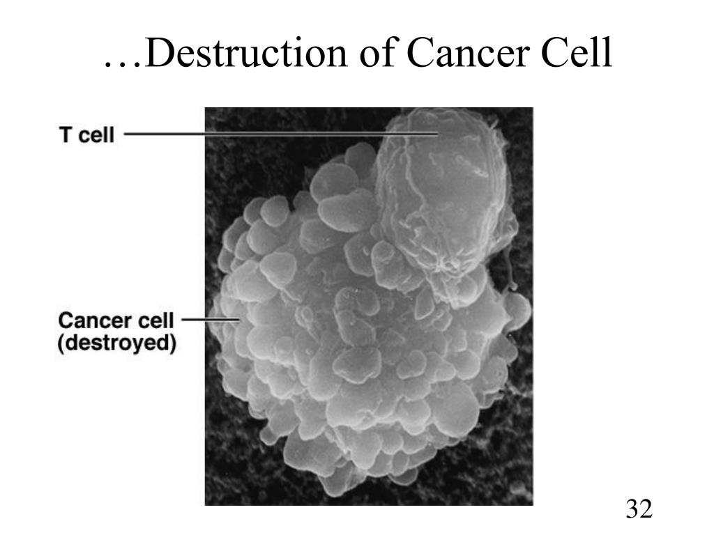…Destruction of Cancer Cell