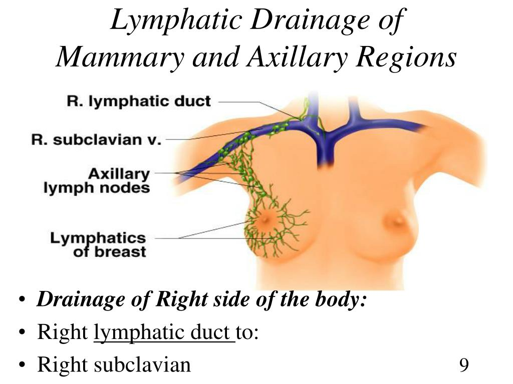 Lymphatic Drainage of