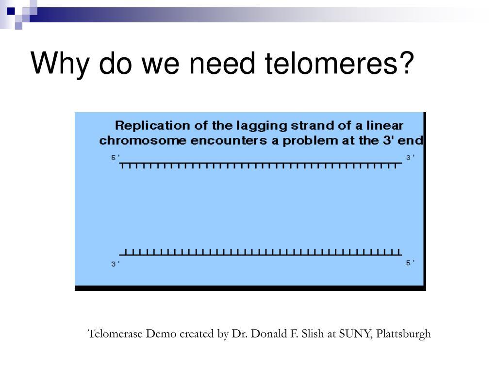 Why do we need telomeres?