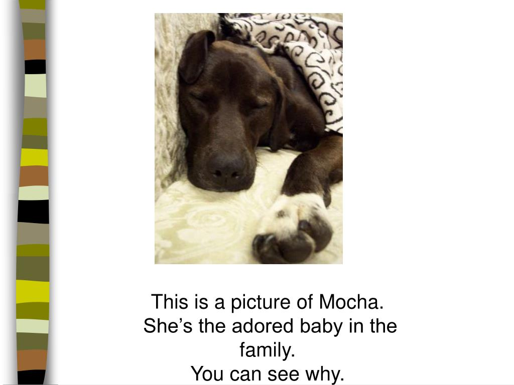 This is a picture of Mocha.