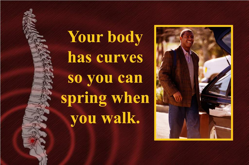 Your body has curves so you can spring when you walk.