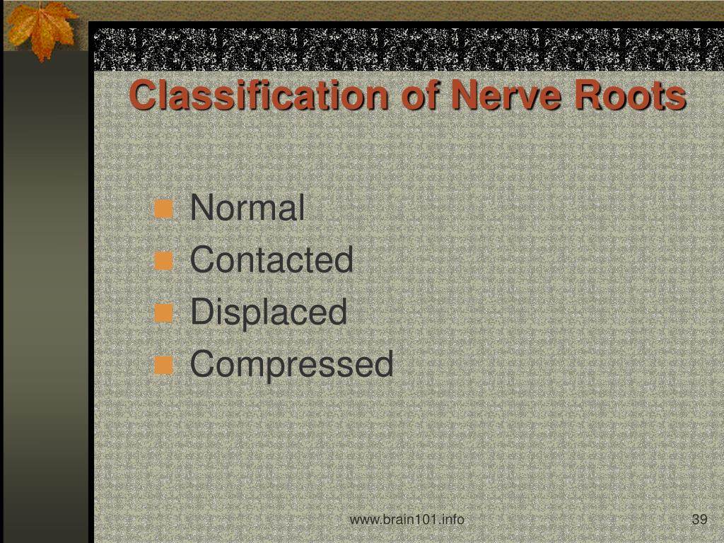 Classification of Nerve Roots