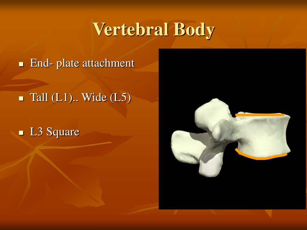 Vertebral Body
