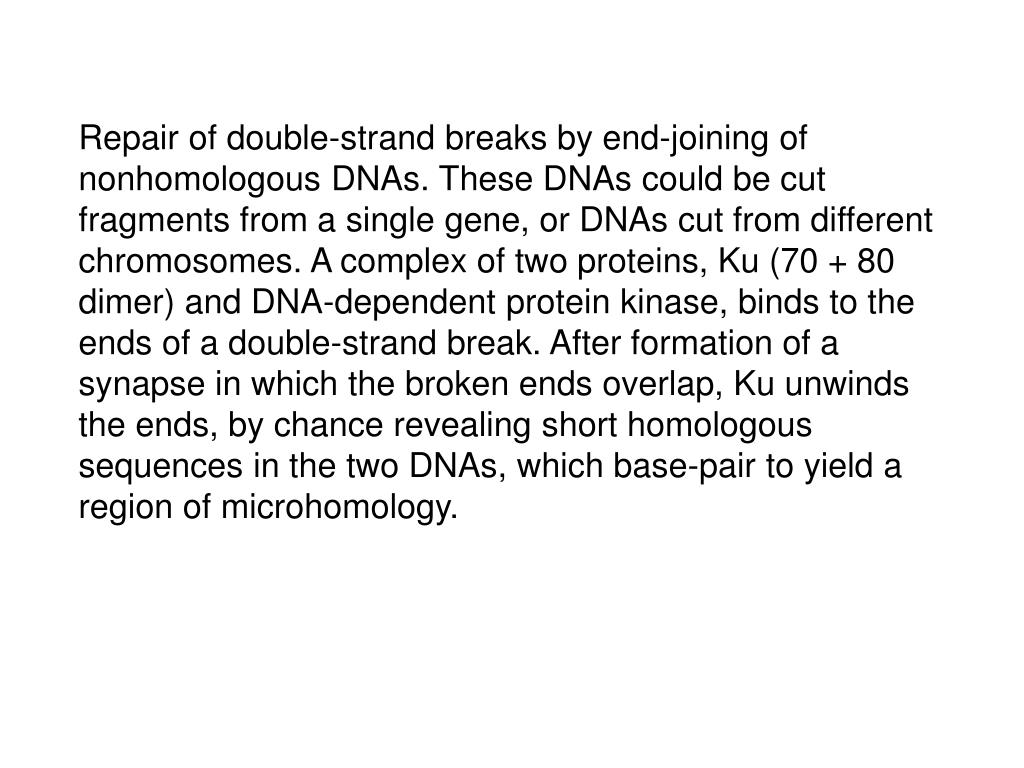Repair of double-strand breaks by end-joining of nonhomologous DNAs. These DNAs could be cut fragments from a single gene, or DNAs cut from different chromosomes. A complex of two proteins, Ku (70 + 80 dimer) and DNA-dependent protein kinase, binds to the ends of a double-strand break. After formation of a synapse in which the broken ends overlap, Ku unwinds the ends, by chance revealing short homologous sequences in the two DNAs, which base-pair to yield a region of microhomology.