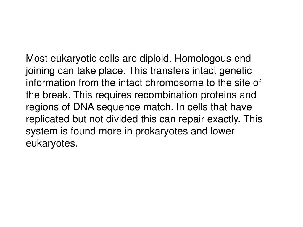 Most eukaryotic cells are diploid. Homologous end joining can take place. This transfers intact genetic information from the intact chromosome to the site of the break. This requires recombination proteins and regions of DNA sequence match. In cells that have replicated but not divided this can repair exactly. This system is found more in prokaryotes and lower eukaryotes.