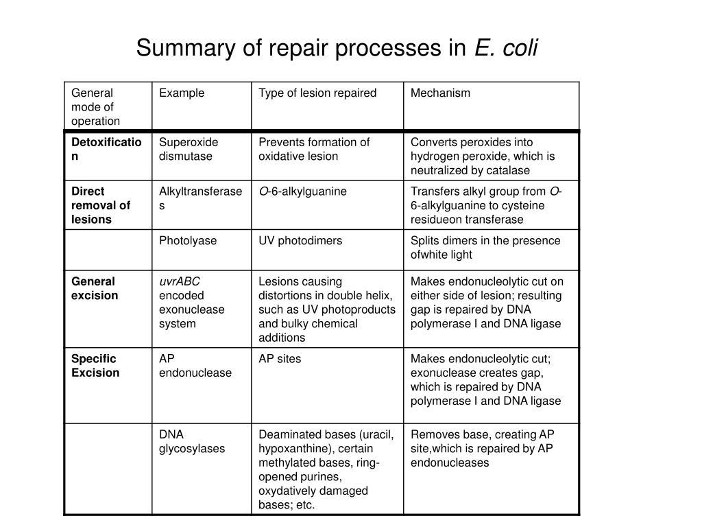 Summary of repair processes in