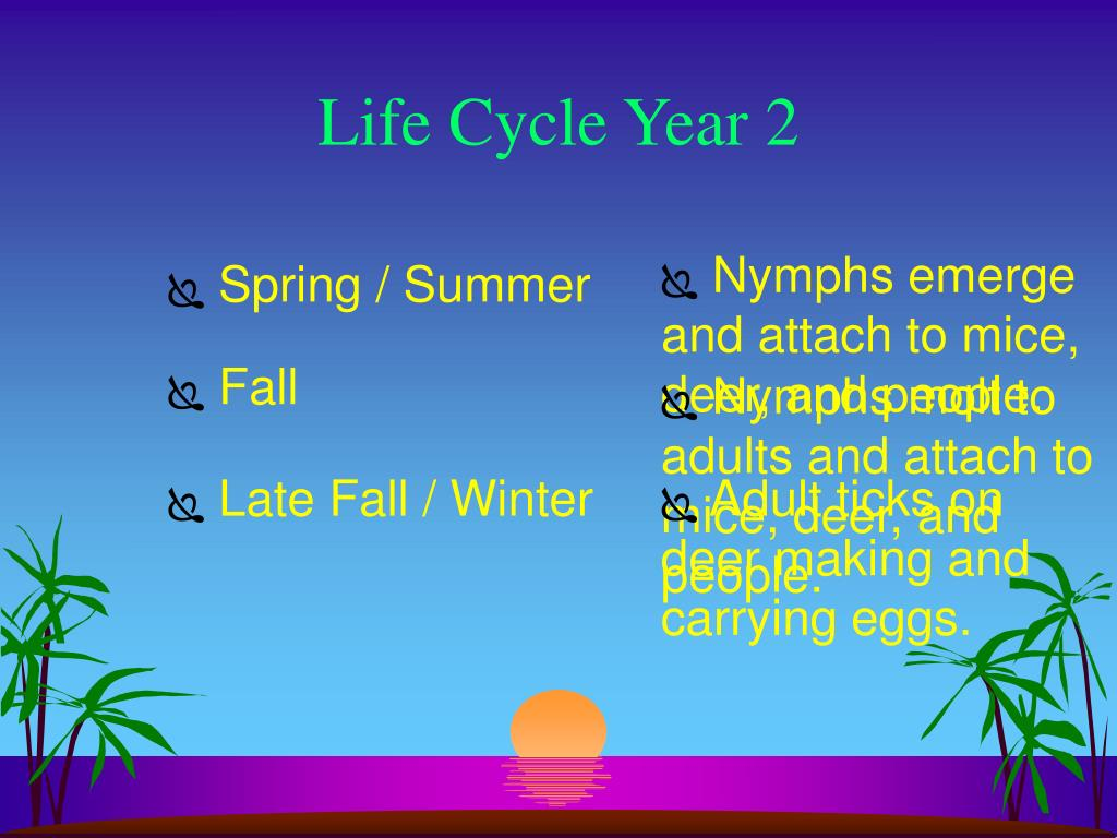 Life Cycle Year 2