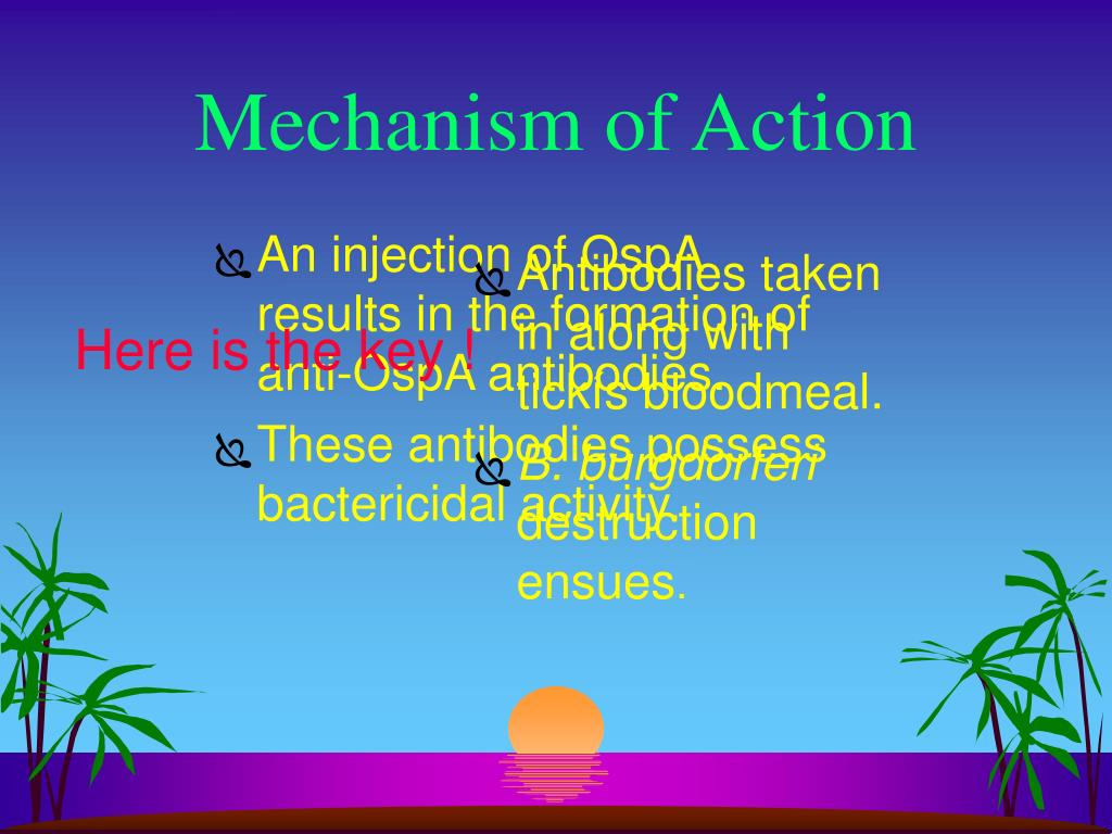 An injection of OspA results in the formation of anti-OspA antibodies.
