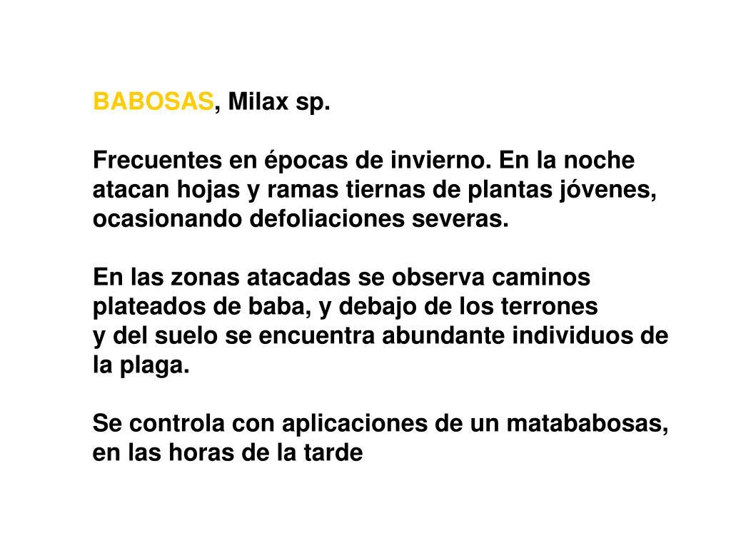BABOSAS