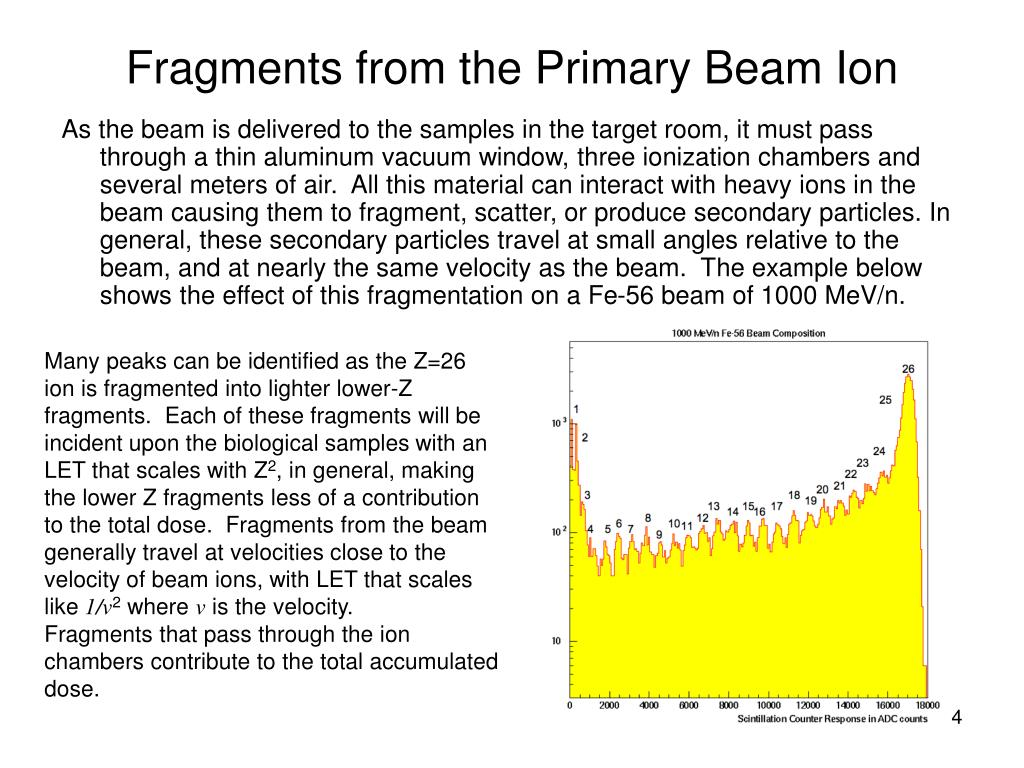 Fragments from the Primary Beam Ion