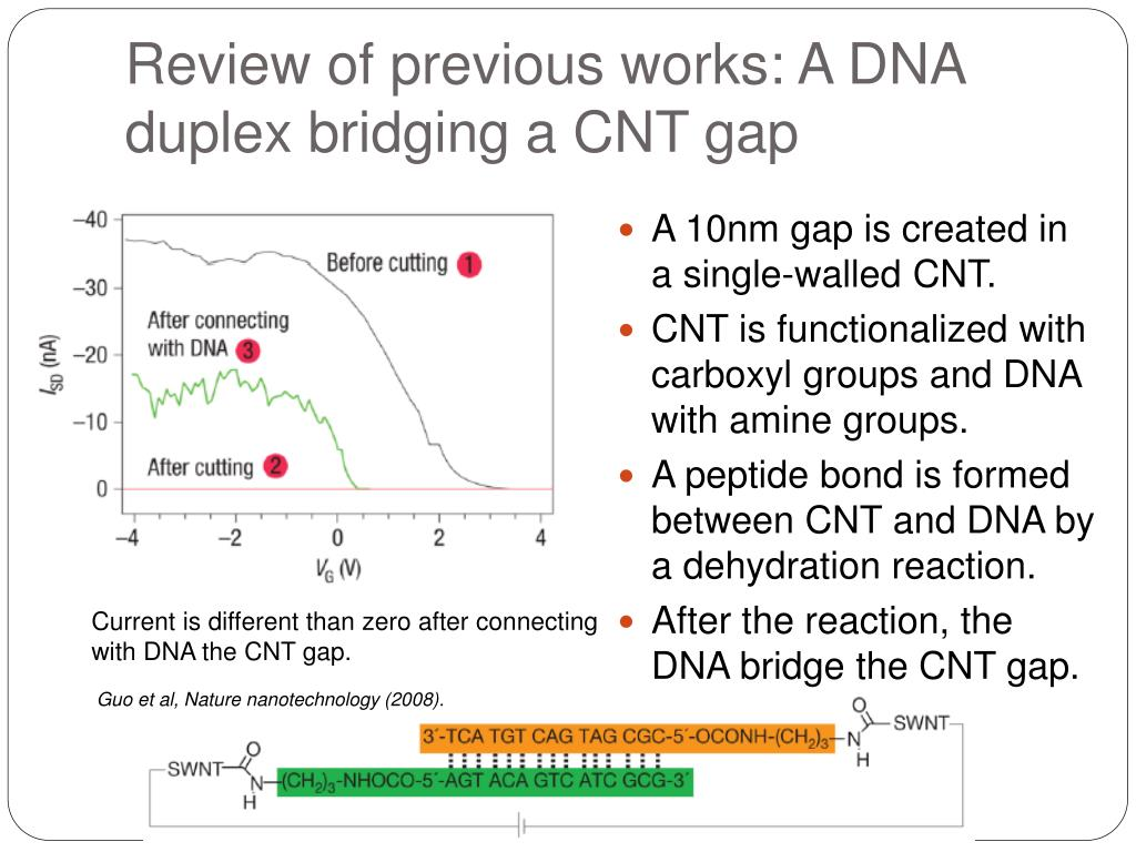 Review of previous works: A DNA duplex bridging a