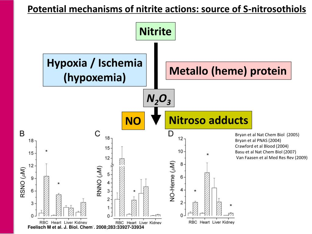 Potential mechanisms of nitrite actions: source of S-nitrosothiols