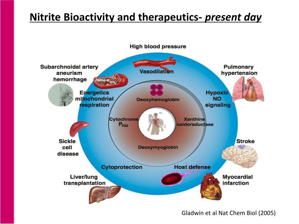 Nitrite Bioactivity and therapeutics-